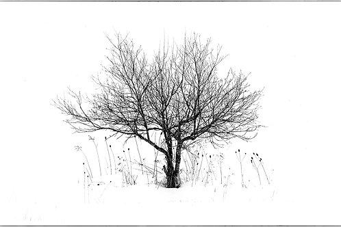 Naples, NY 2014 SNOW TREE