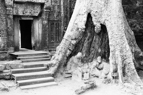 42 ANGKOR WAT, CAMBODIA - TREE DWELLERS