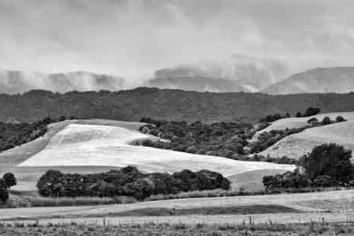New Zealand 2016 - FARM FIELD