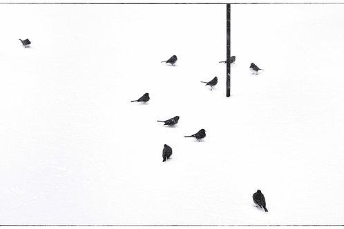 107 KEUKA LAKE, NY - 13 BIRDS
