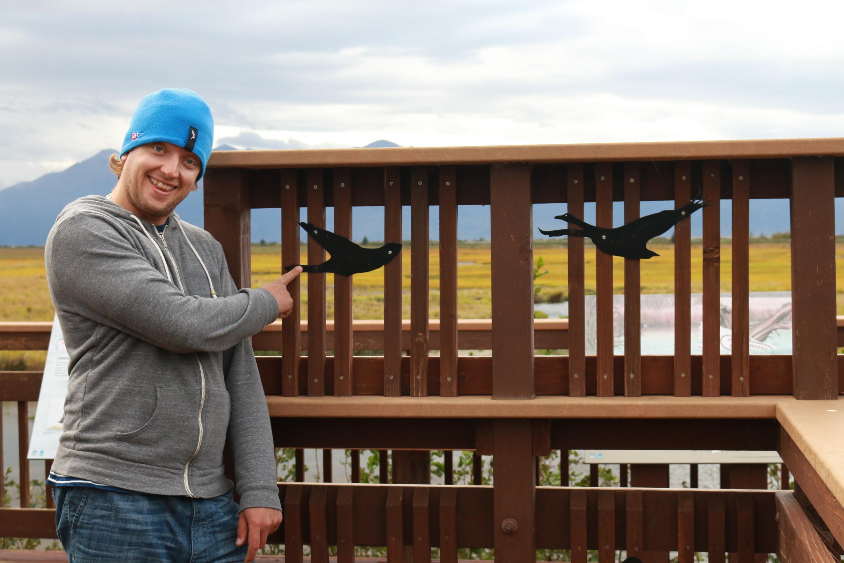 Potter Marsh Wildlife Viewing