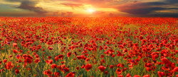 banner-remembrance
