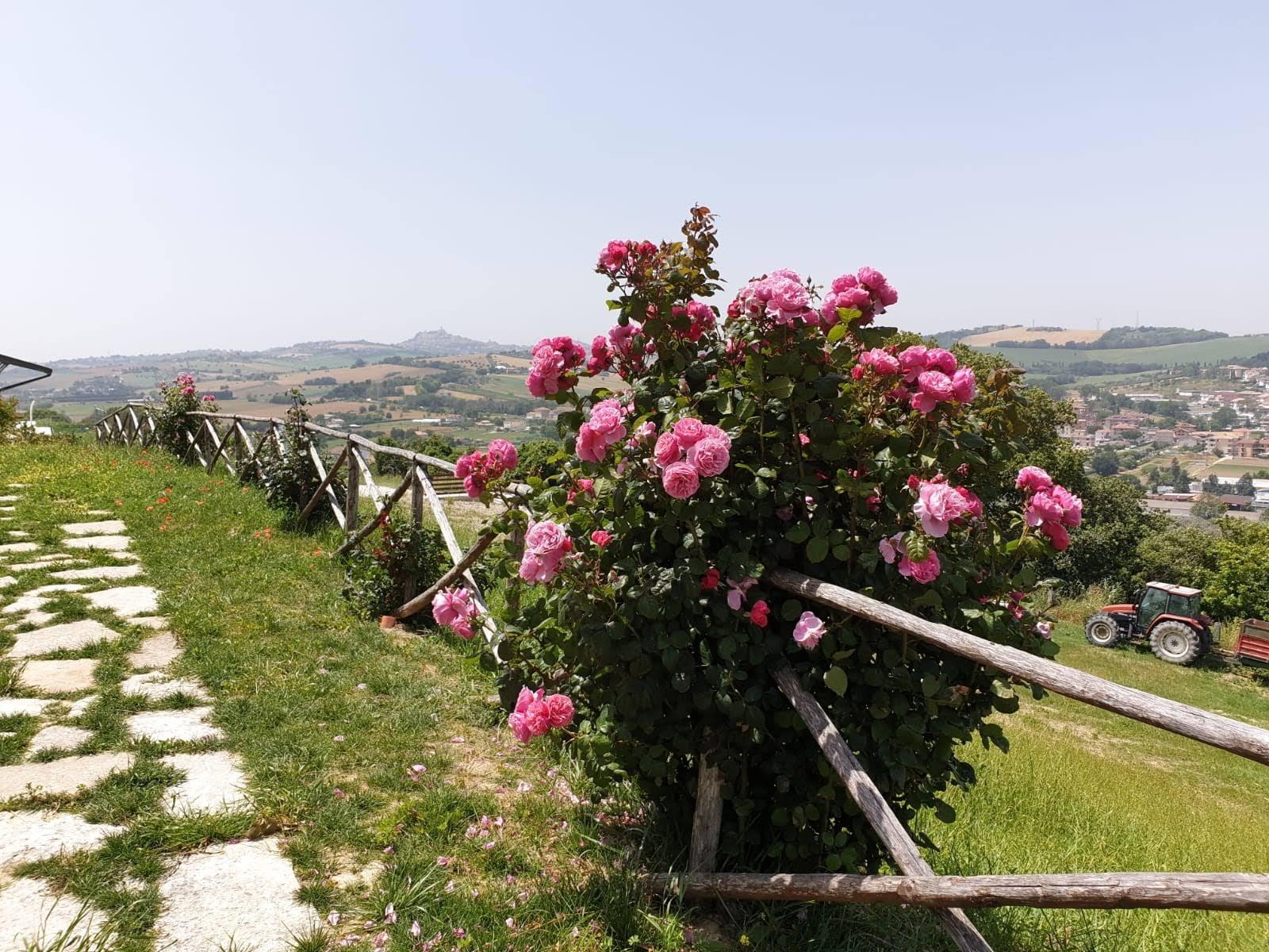 panorama Azienda Abbruzzetti