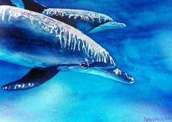 dolphins 2.jpg