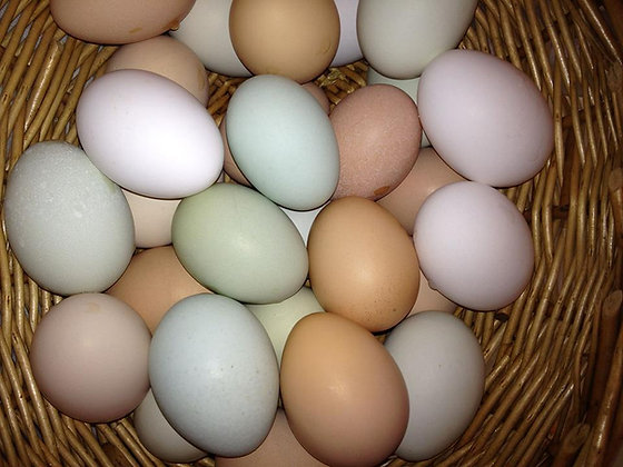 Eggs, Free Range - Only for pick up in our store