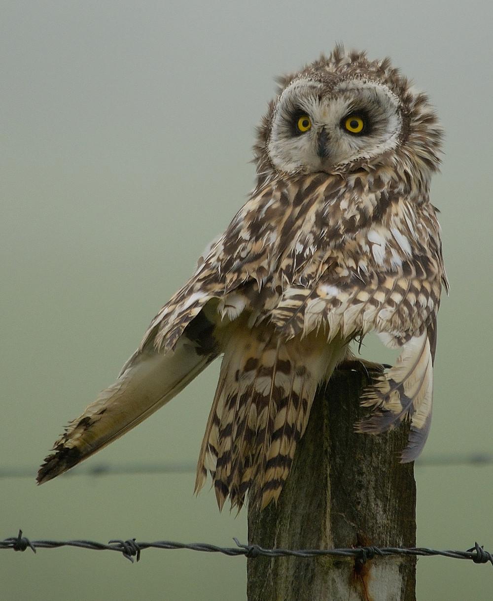 OWL (6).JPG