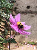 Bee%20flower_edited.jpg