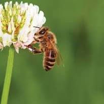 bee-flower.jpeg