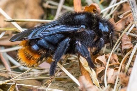 Bumblebee Aware - June 2021