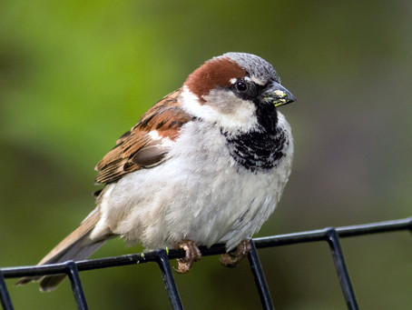 RSPB Big Garden Birdwatch update