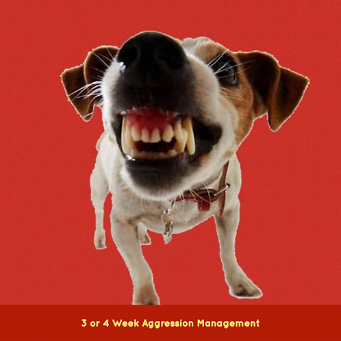 AGGRESSION MANAGEMENT DEPOSIT