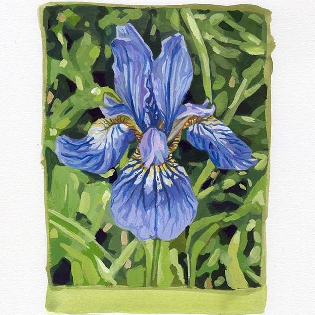 Iris.14 x 19 cm #painting #iris #floralp
