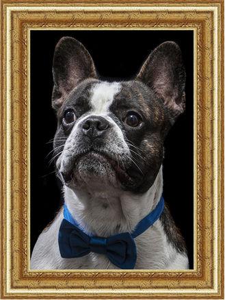 dog frame.jpg