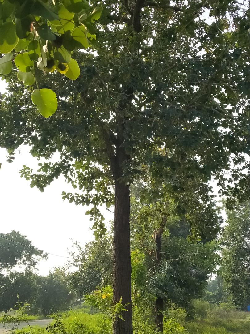 12 years tree