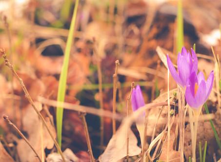 Frühling - raus aus dem Unterschlupf und ab ins nächste Abenteuer mit dem Camper..
