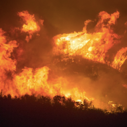Three Steps to Drive California's Wildfire Mitigation Efforts Forward, Now