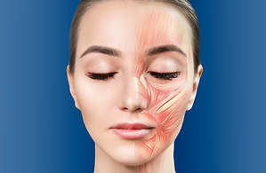 Anatomia Topográfica da Face Aplicada a Harmonização Facial