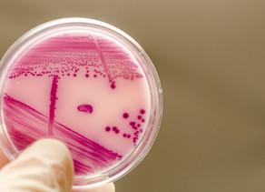 O Antibiograma