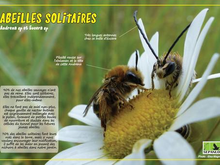 2. Les abeilles solitaires