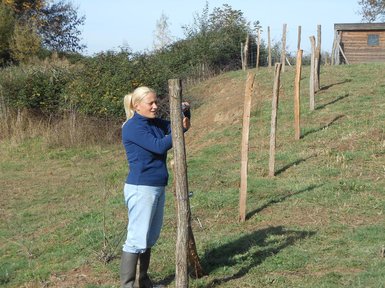Entretien des clôtures à moutons