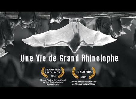 Soirée Chauves-souris Caves de Nérac : en savoir plus