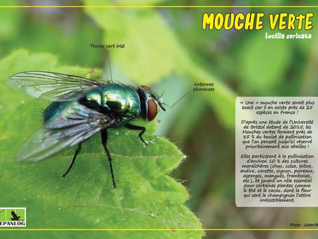 17. Mouche verte