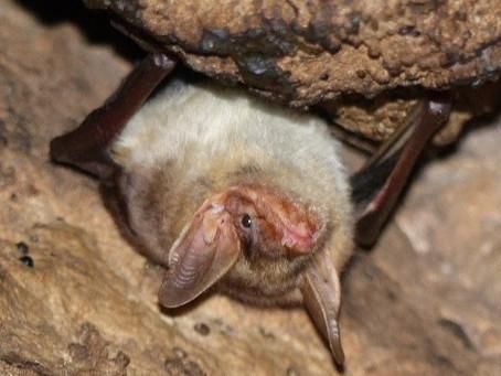 2. Découvrez les Chauves-souris          du Lot-et-Garonne