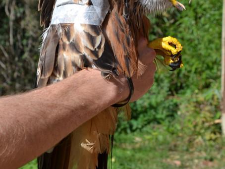 Du plomb dans l'aile