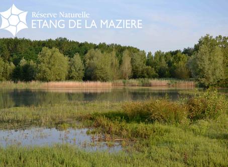 Reconnaître les oiseaux d'eau : visite de la Réserve Naturelle de la Mazière, Dimanche 15 décemb