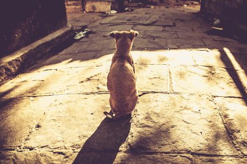 VaranasiIndia022417_035.jpg