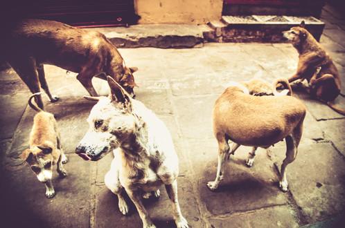 VaranasiIndia030617_059.jpg