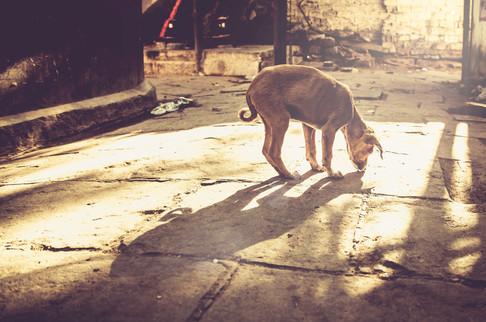 VaranasiIndia022417_037.jpg