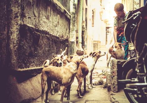 VaranasiIndia030417_220.jpg