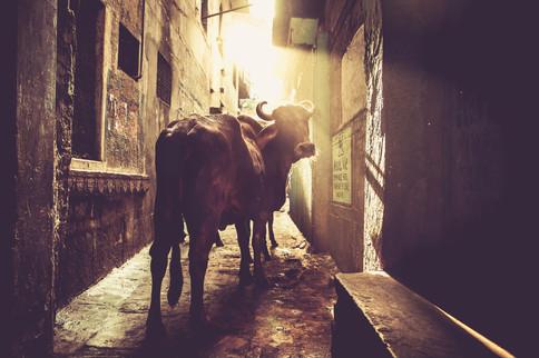 VaranasiIndia030717_079.jpg