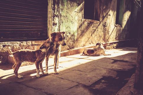VaranasiIndia030517_033.jpg
