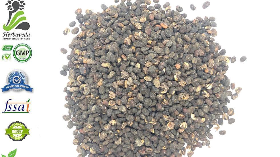 Psoralea corylifolia (Babchi) Seeds