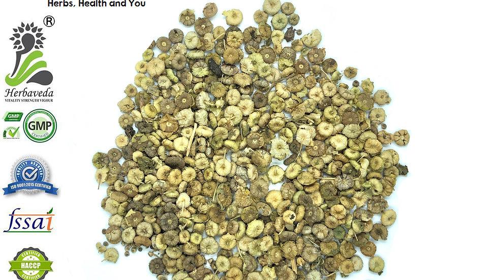 Malva Sylvestris or Khabazi or Khubbaji seeds