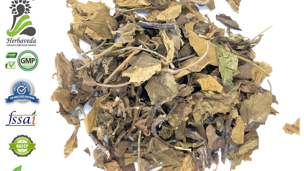 Gudmar Leaves or Gymnema Sylvestre Leaves