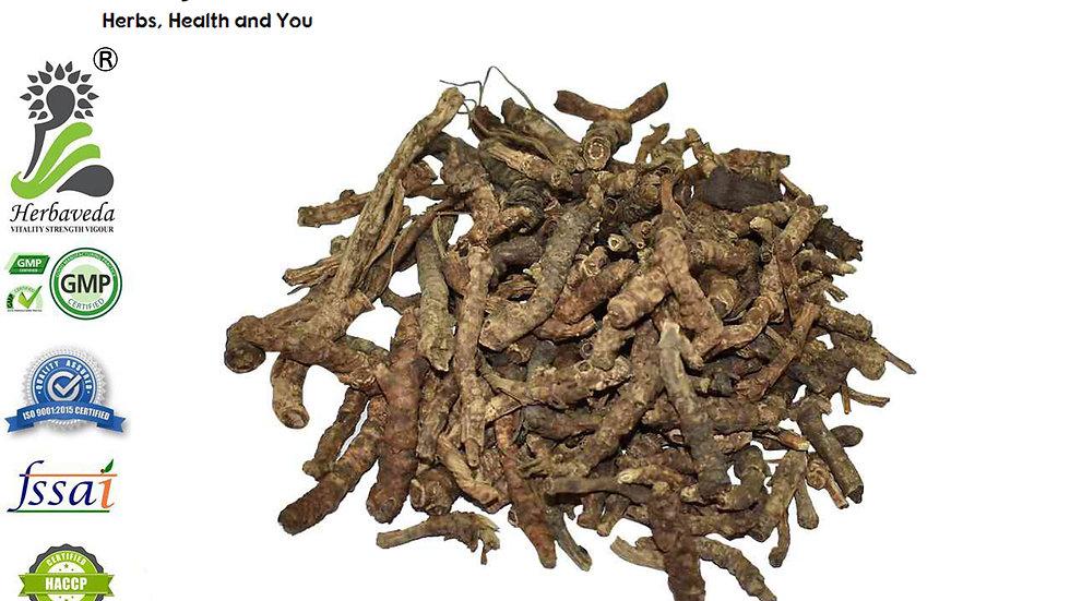 Kutki Or Picrorhiza Kurroa
