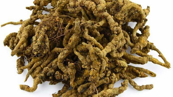 Coptis chinensis Or Blood root