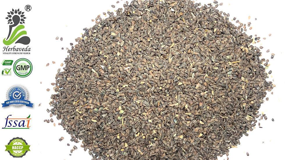 Asteracantha longifolia or Talmakhana or kokilaksha Seeds