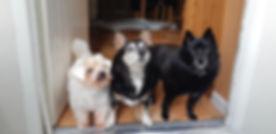 Adore Pets
