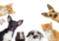 set of pet looking.jpg