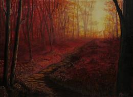 Deep Woods Sunset.jpg