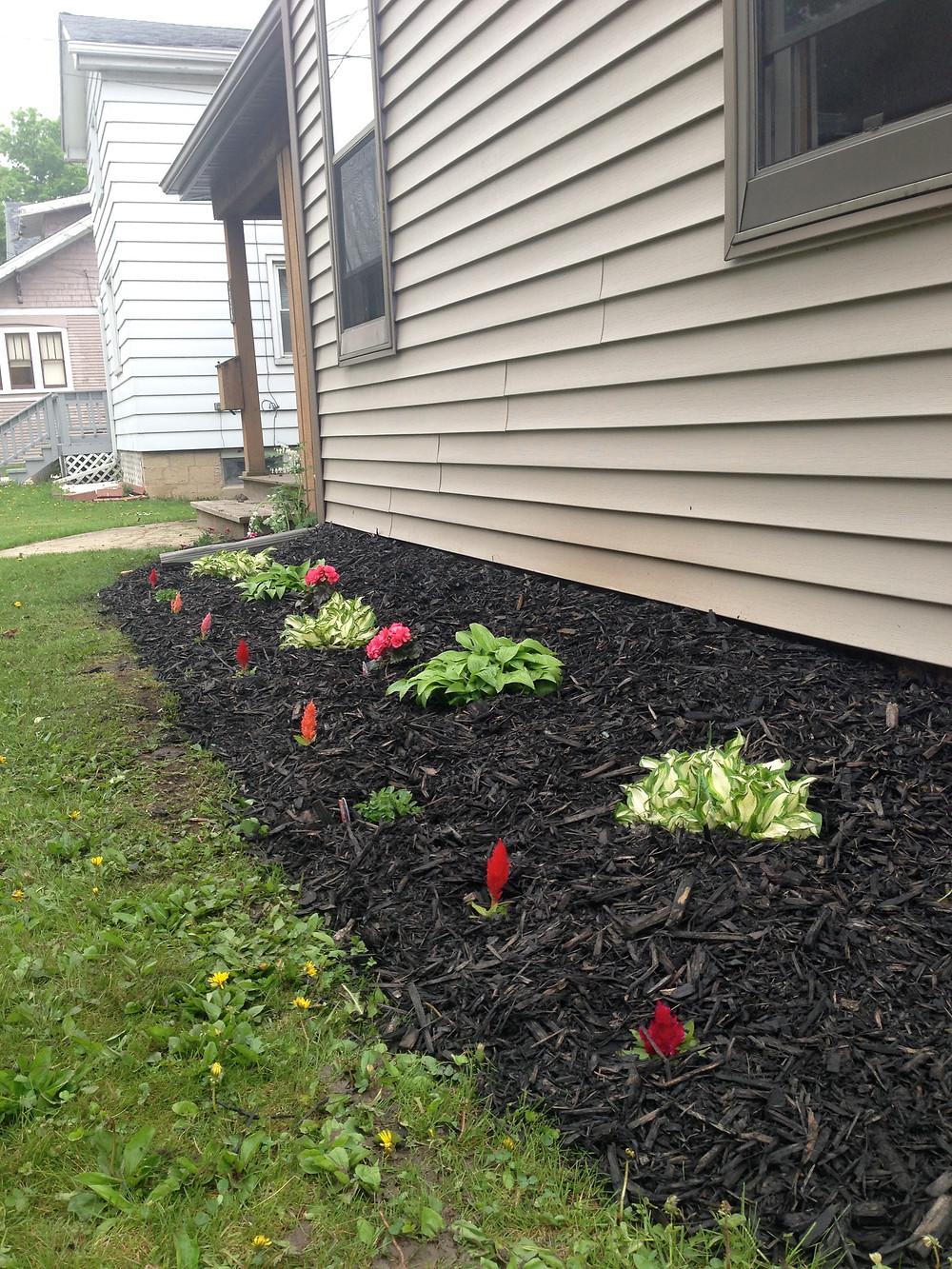 Hostas, begonias, bell flowers