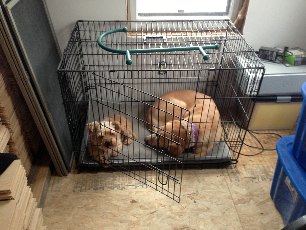 Our dogs, Norris and Winnie, finding a retreat from our home renovations