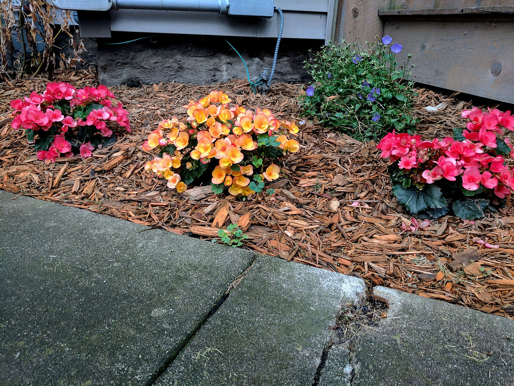 Begonias and bell flowers