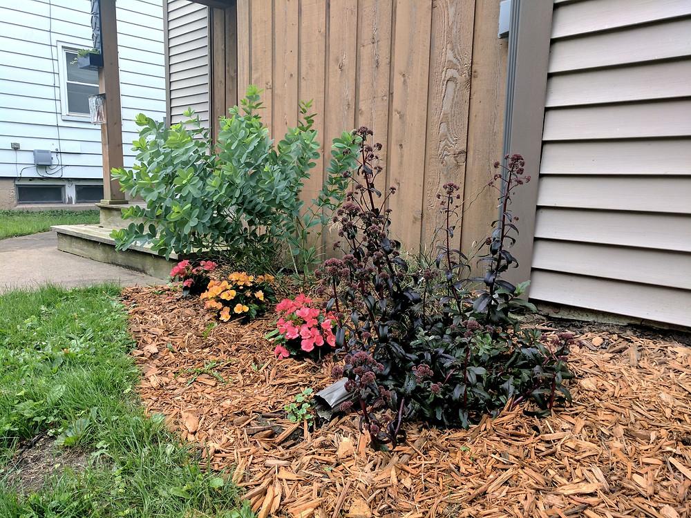 Purple sedum, batisia, and begonias