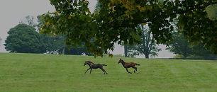 Claiborne-horses.jpg