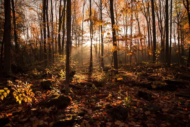 Nature - Sunrise